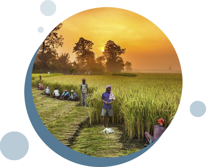 Centralized Database for all farmers