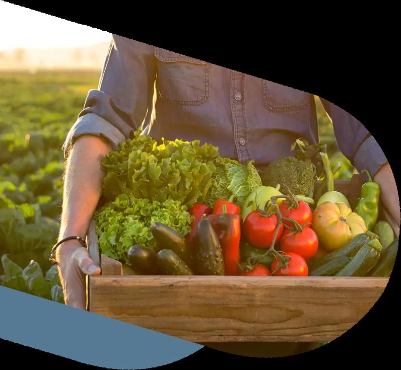 Organic Food, Supply Chain